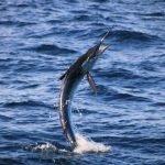 Fishing Regulations in Cabo San Lucas
